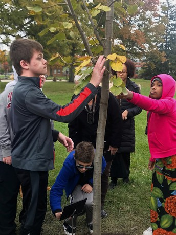 Show exploring the new tree and plaque are CJ, Nicholas, and Amina with art teacher, Ms. Rachelle Smith.