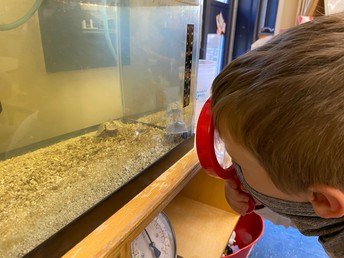 checking on our horseshoe crabs