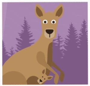 Forgiving Kangaroos!