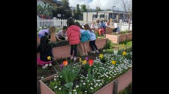 Alta Vista Garden Club