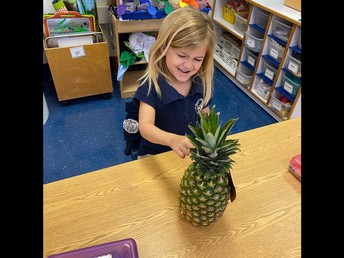 learning about pineapples