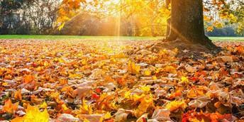 Fall Break/ Vacaciones de otoño...