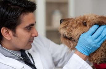 FEATURED CAREER OF THE WEEK:                                                      Veterinarian