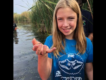 Catching damselflies
