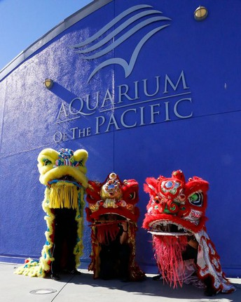 Aquarium of the Pacific's Autumn Festival