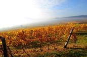 10:00 - 11:00 | Taste of Tradition: Terroirs in Tokaj