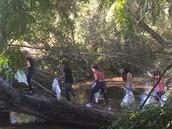Cleaning The Auburn ravine
