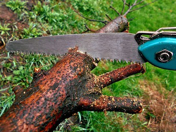 Make Certain You're Going To Get The Suitable Aid For Trees In Your Backyard