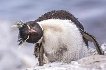 Penguin Awareness Day