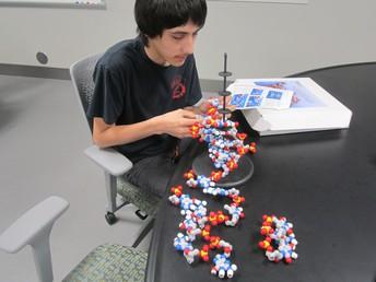 Assembling DNA