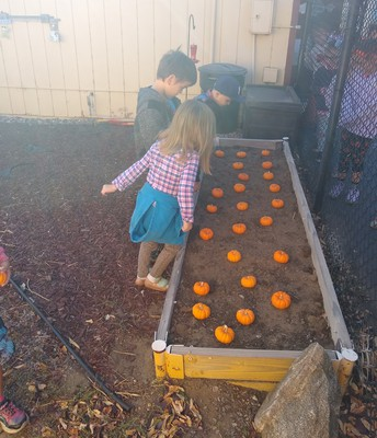 Ms. Shelton's Annual Pumpkin Patch