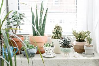 #11 Add Plants