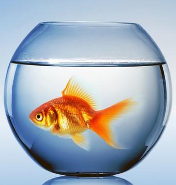Fishbowl Ideas