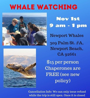 Whale Watching! Friday November 1st