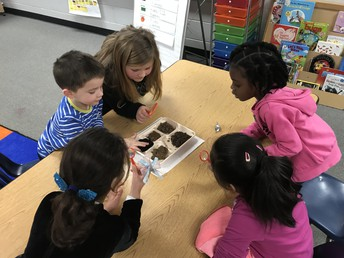 Look at the different types of soil!