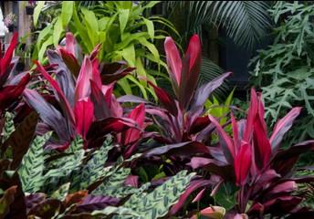 Tropical Plant Adaptations
