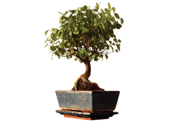 Beer & Bonsai at Victory Beer Hall