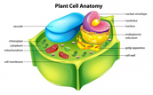 General plant cell