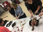 SCHS during Livestock Anatomy Class