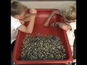 Students in Kindergarten are working at their sensory table!