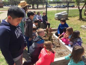 3rd Grade Preparing to Plant!