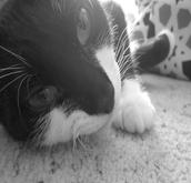 Robert's Cat (Coco)