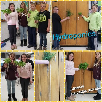 Hydroponics in Fourth Grade