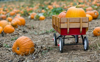 Rancho Bernardo Pumpkin Farm