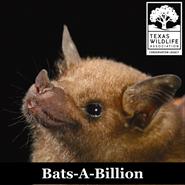 Animal Encounters: Bats-A-Billion
