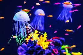 The Jellyfish!