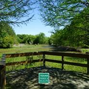 Wetland Wonderment