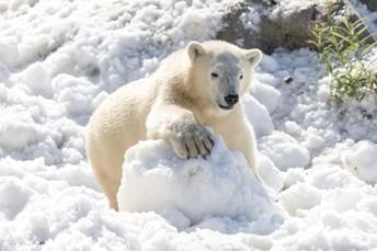 Introducing: Polar Bear Recess!