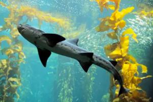 Monterey Bay Aquarium LIVE Cams