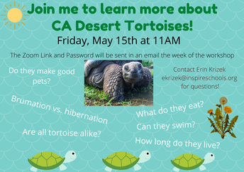 VIRTUAL Community Connections Tortoise Workshop!