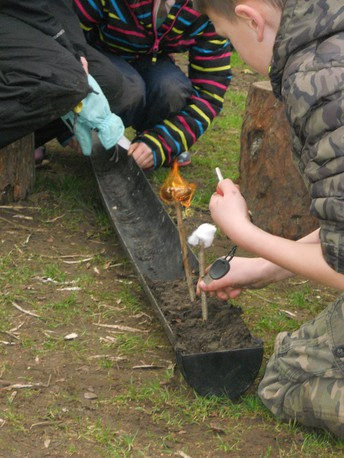 Cross Curricular Forest Schools