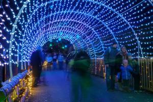 Winter Light Spectacular - November 9-December 30