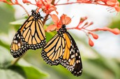 Pollinator Fact Sheets Available