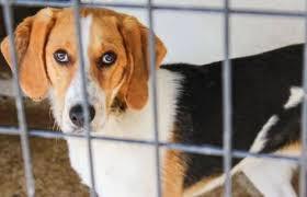 Field Trip - Keokuk Animal Shelter - May 10