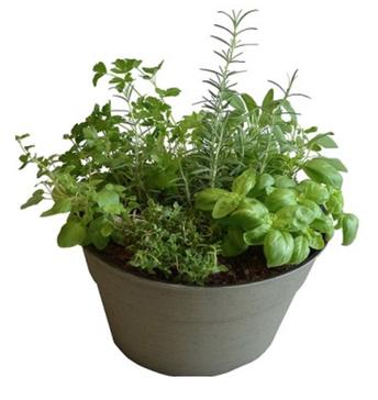 Herb Garden Bowl