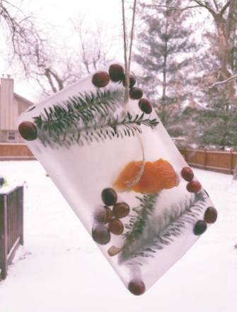 Winter Craft and Science