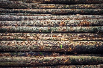 What sort of Owner of a house can Benefit from Hiring some sort of Encountered Hardwood Company
