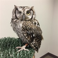Animal Encounters: Owl Adaptations