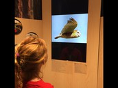 Learning about various birds/animals!