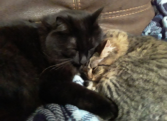 Dr. Isley's cats, Beau and Eleanor!