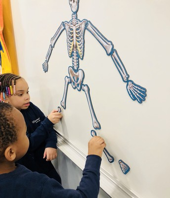 """Gabby from K1B proudly shared, """"Did you know our skull protects our brain and our ribs protect our heart?"""""""