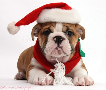 December *Bulldog Spotlight* Theme
