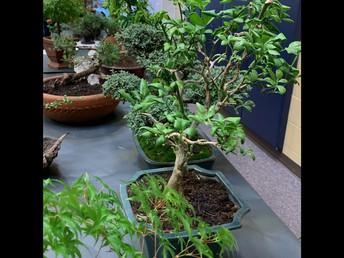 Exquisite Bonsai Display