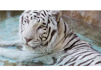 Feb. 26th: Rancho Las Lomas Wildlife Foundation