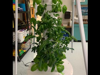 Science classes have a crop!