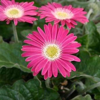 The Hidden Agenda Of Anniversary Flowers By Year